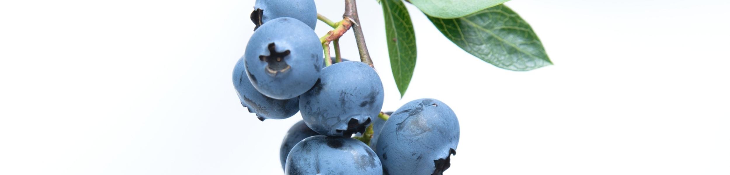 blueberry-fruit-blue-45908